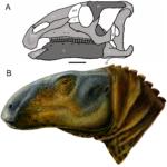 Eolambia head