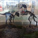 Gasparinisaura skeleton