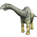 Haplocanthosaurus standing