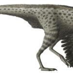 Harpymimus flip wings
