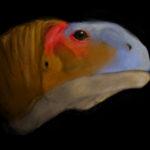 Malawisaurus head