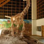 Malawisaurus skeleton