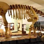Opisthocoelicaudia skeleton scaled