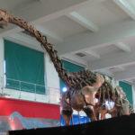 Patagosaurus skeleton