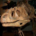 Piatnitzkysaurus skull
