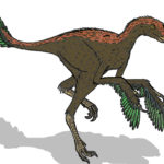 Protarchaeopteryx feathered