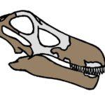 Quaesitosaurus skull