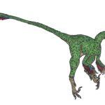 Saurornithoides tail scaled