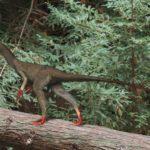 Sinocalliopteryx walking