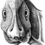 Telmatosaurus head