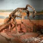 Thecodontosaurus skeleton