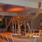 kotasaurus skeleton