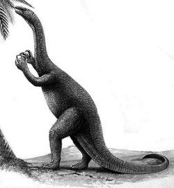 coloradisaurus